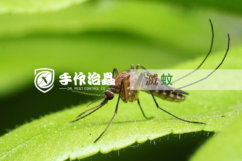 滅蚊, 天然滅蚊方法, 手作治蟲公司