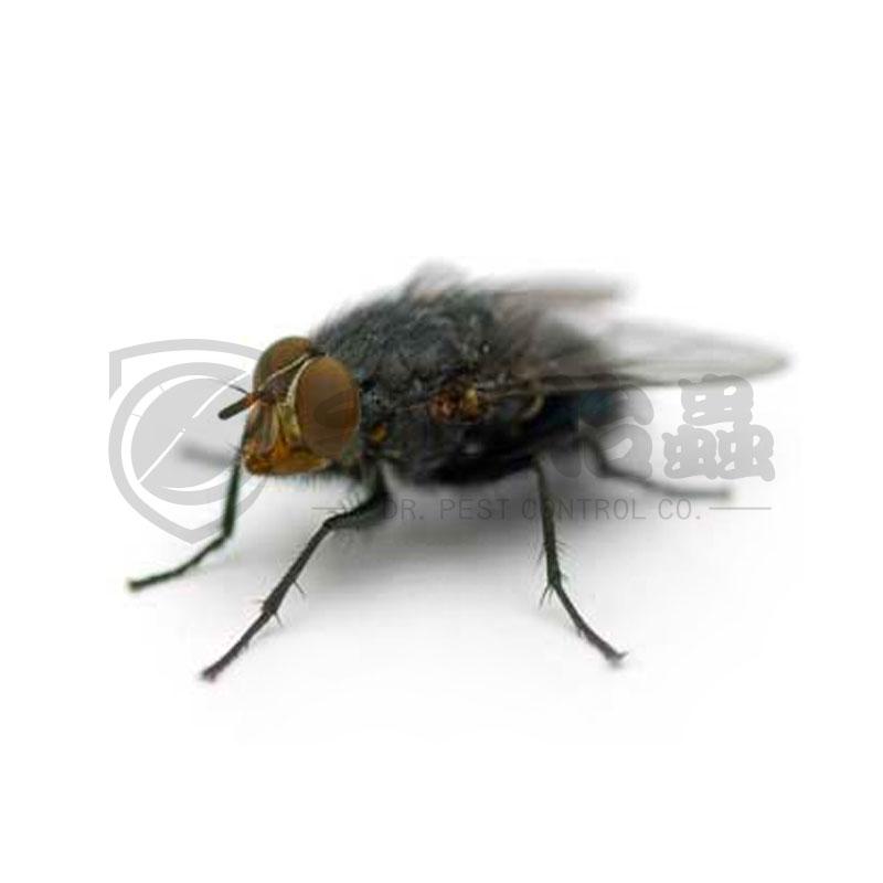 家居滅蟲方法 , 家居滅蟲邊間好 , 「手作治蟲」家居滅蟲服務 05