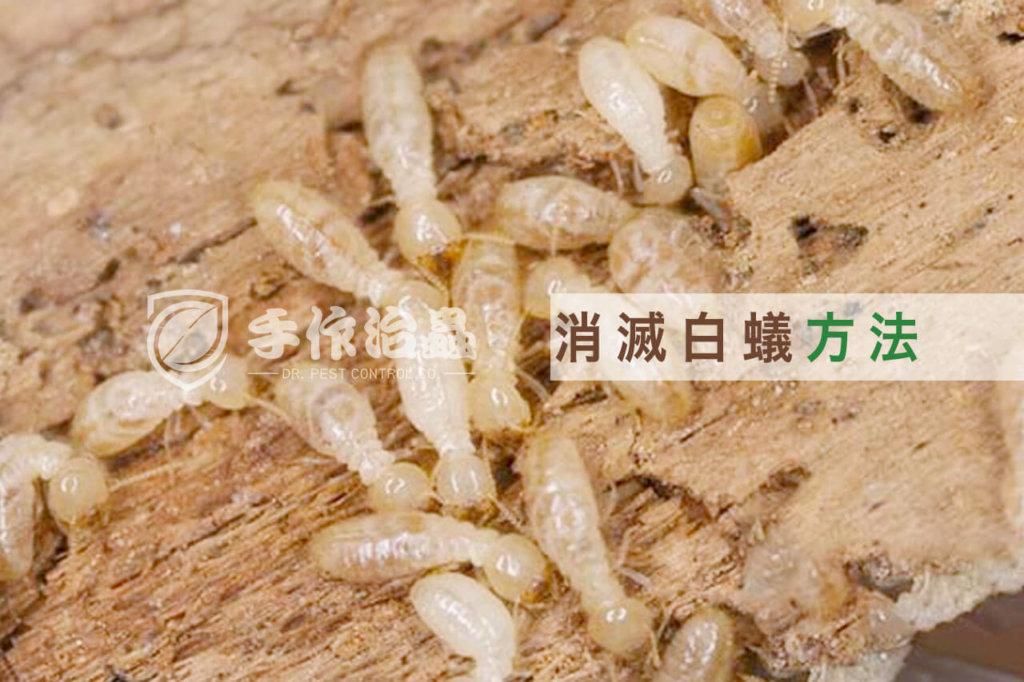 消滅白蟻方法 , 如何根除白蟻 , 「手作治蟲」白蟻防治公司-cover