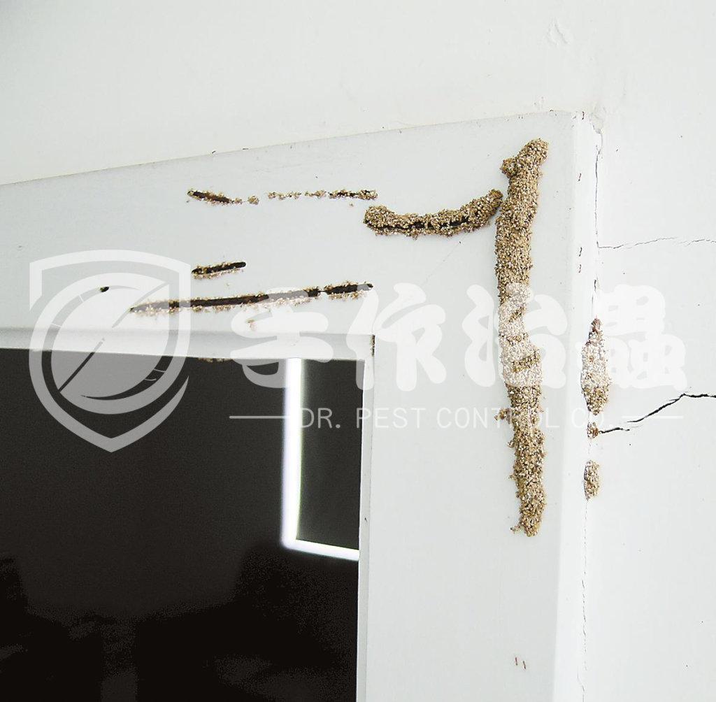 白蟻防治,預防白蟻,「手作治蟲Dr Pest」防治白蟻-4