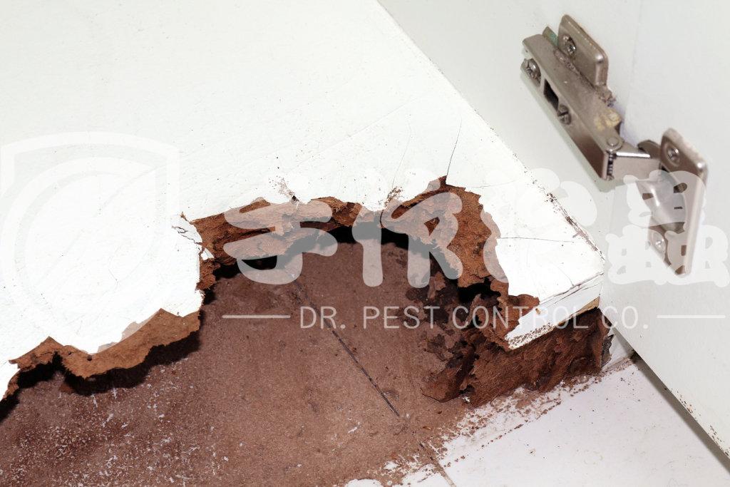 除白蟻方法,如何消滅白蟻,「手作治蟲」除白蟻公司-1