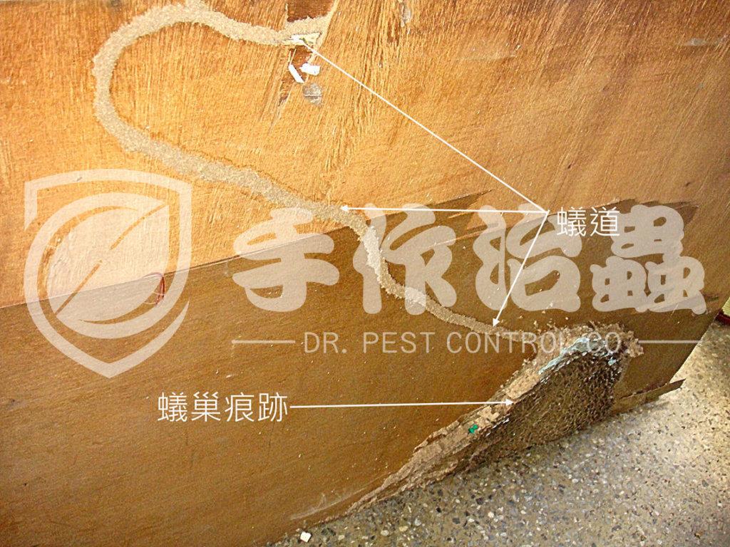 滅白蟻   滅白蟻服務 「手作治蟲滅白蟻公司」DR PEST CONTROL EXPERT-08