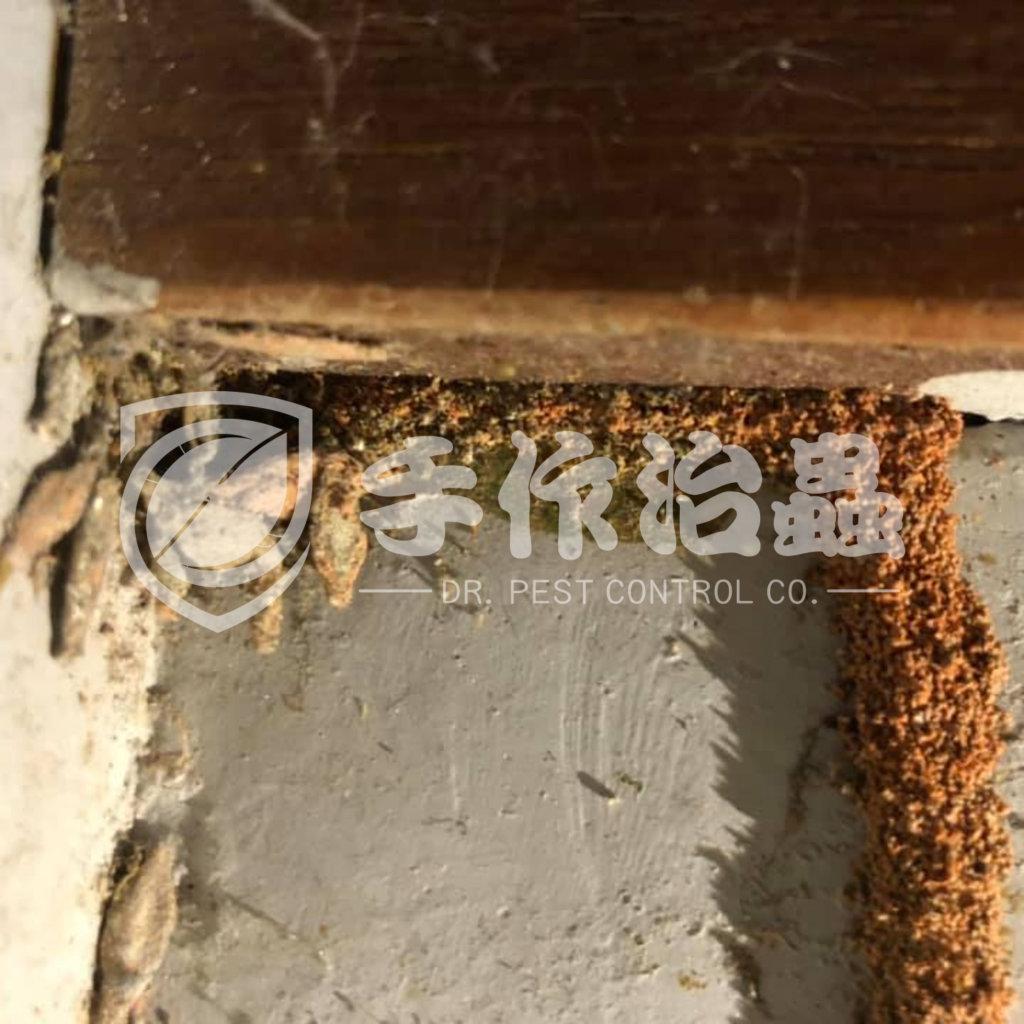 白蟻防治,預防白蟻,「手作治蟲Dr Pest」防治白蟻-1