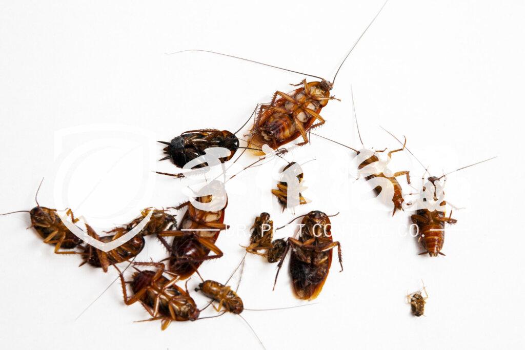 滅蟲公司推介,滅蟲公司邊間好,「手作治蟲滅蟲公司」- 4