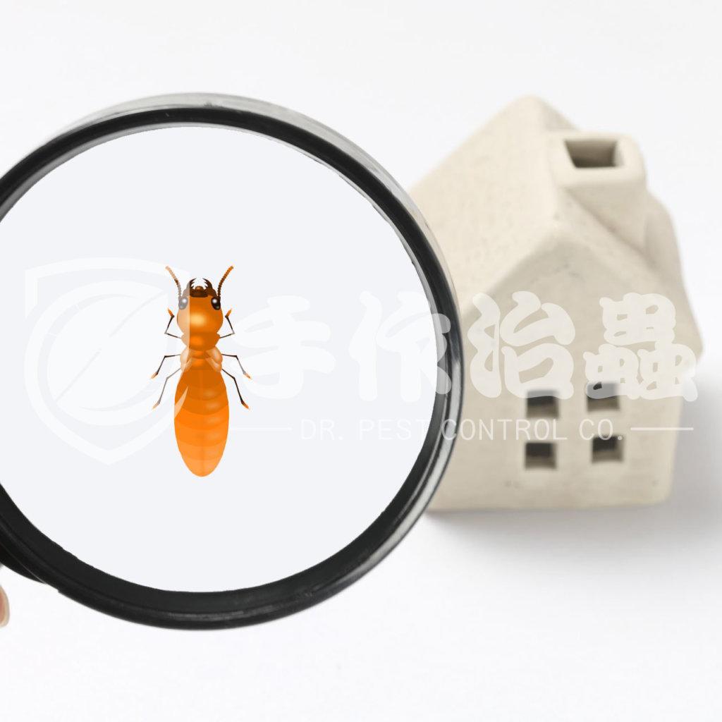 白蟻防治,預防白蟻,「手作治蟲Dr Pest」防治白蟻-5
