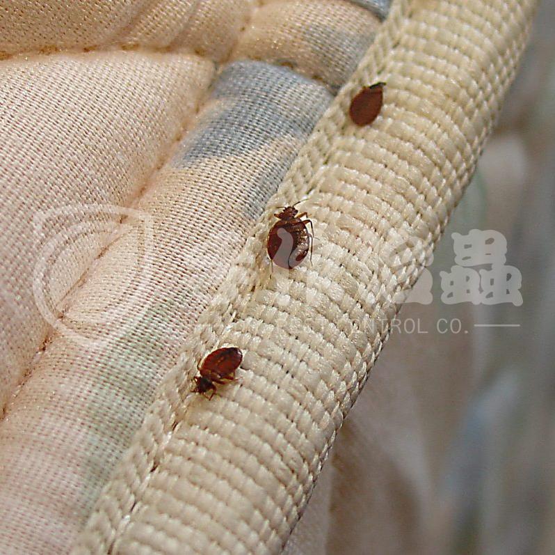 滅蝨 | 滅木蝨 | 滅蝨公司3
