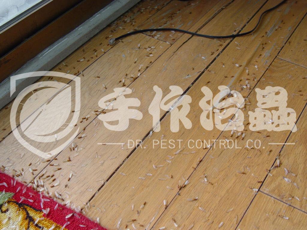 滅白蟻   滅白蟻服務 「手作治蟲滅白蟻公司」DR PEST CONTROL EXPERT-09