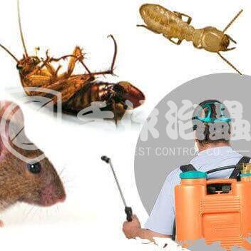滅蟲公司推介,滅蟲公司邊間好,「手作治蟲滅蟲公司」- 1