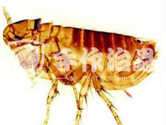 家居滅蟲 家居滅蟲公司 「手作治蟲滅蟲服務公司」-3