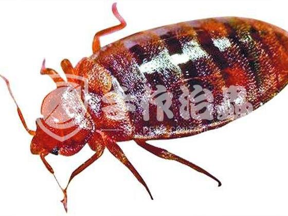 家居滅蟲 家居滅蟲公司 「手作治蟲滅蟲服務公司」-7