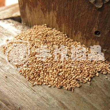 白蟻防治,預防白蟻,「手作治蟲Dr Pest」防治白蟻-6