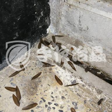 白蟻防治,預防白蟻,「手作治蟲Dr Pest」防治白蟻-9