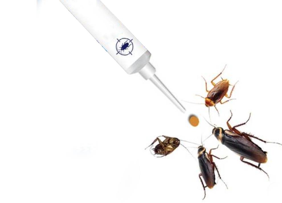 消除蟑螂的N種辦法-如何才能優雅地消除蟑螂?