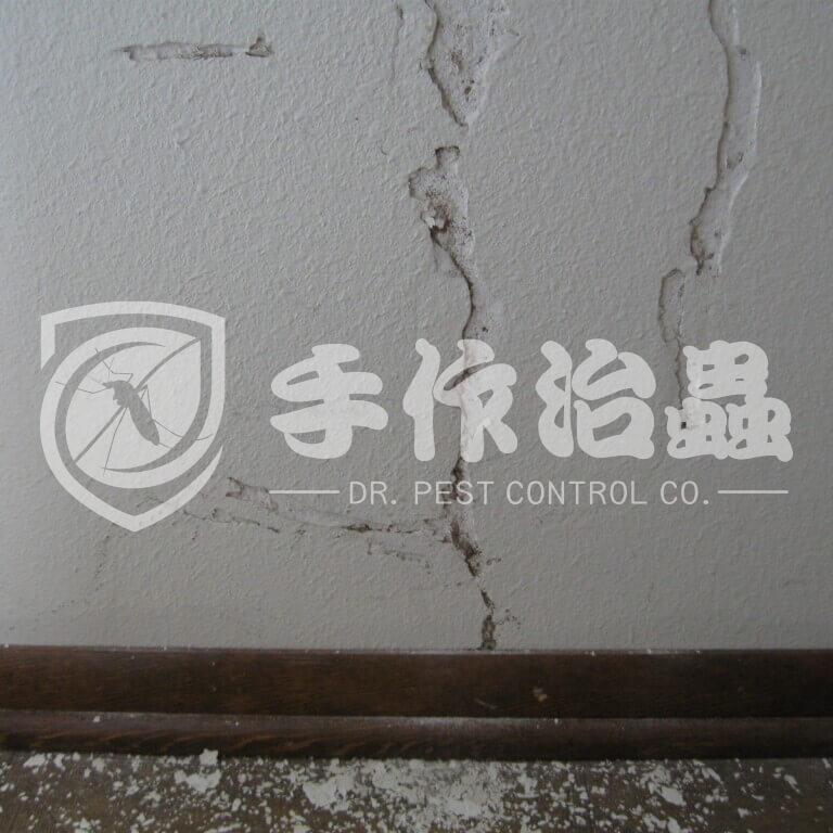 白蟻跡象,白蟻原因,「手作治蟲」Dr PEST Control Expert白蟻成因05