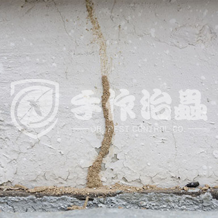白蟻跡象,白蟻原因,「手作治蟲」Dr PEST Control Expert白蟻成因04