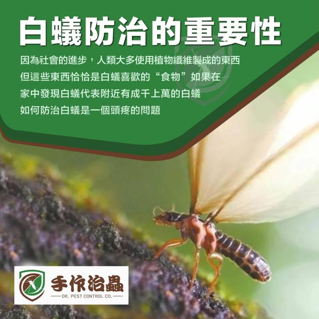 白蟻防治費用,除白蟻公司費用,「手作治蟲」DR-PEST-COMPANY-07