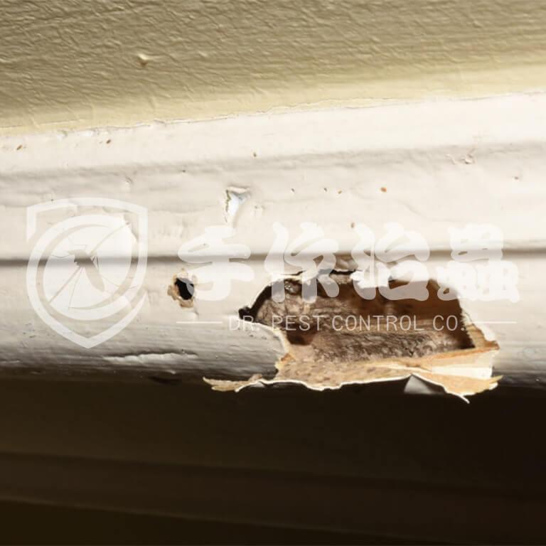 白蟻跡象,白蟻原因,「手作治蟲」Dr PEST Control Expert白蟻成因06